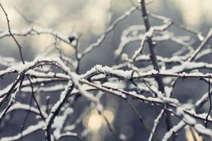 Winter Tales by MilaseryPhotos