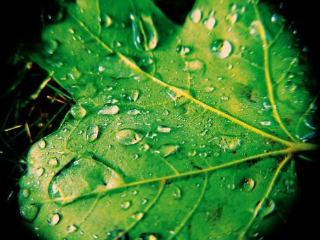 water on a leaf by nastysauceohyes