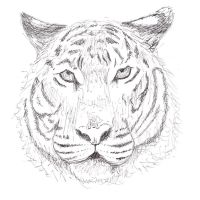 Pen and Ink Tiger by Leucrota