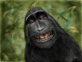 Macaca Nigra (Black Crested Macaque) by digitalchet