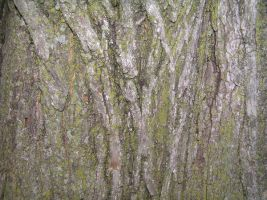 Bark - Texture Stock 2 by absinthes-stock