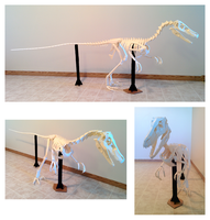 Velociraptor Skeleton Papercraft (Build) by Gedelgo