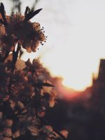 sweet spring by chemicalbreath