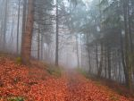 Foggy Forest III by Weissglut