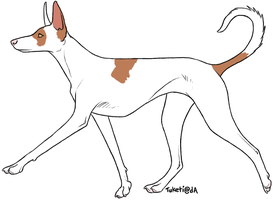 .: Ibizan Hound Adopt 1 :. by blueberry-tea