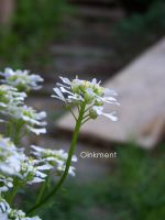 Miniature Gardens-White by Oinkment