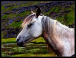 Horse by Evicas