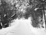 Pathways BW by beautyinreview