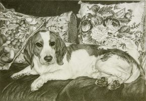 Muttsky - our pet beagle by noeling