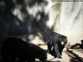 Spectacled bears by Cansounofargentina