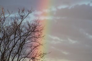 Rainbow by Buggie1112