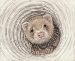 Hypno Ferret by SavageArt