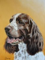 english spaniel by Vitadog