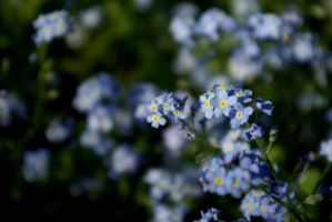 And more blue by Yahira87