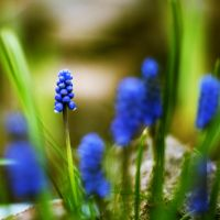 Blueberries by photorific