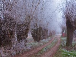 Willows VI by starykocur
