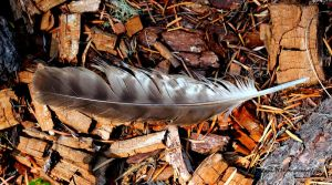 Owl feather by lupagreenwolf