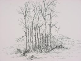 Grove of trees by teddybearcholla