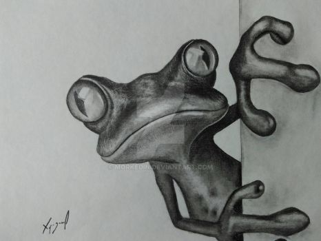 frog pencil drawing by morkedin