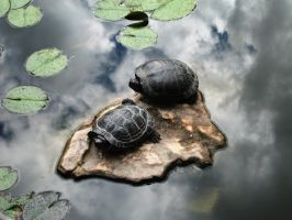 Turtles by bookgirl1011
