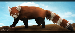 Red Panda by XBlackIce