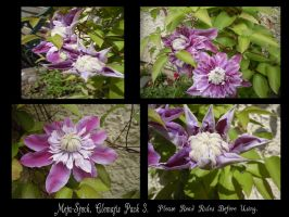 Clematis Stock Pack 3. by Meta-Stock