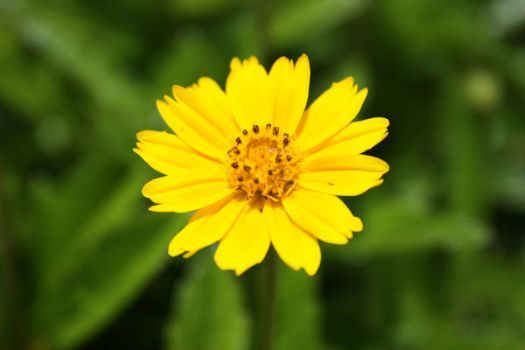Yellow Flower by q-stock