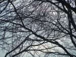 Web of Branches by Loffy0
