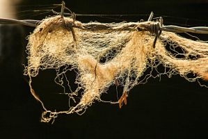 Entangled by SnapperRod
