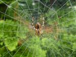 Wet Web - Front Garden by SrTw