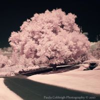 Path to Cotton Candy by La-Vita-a-Bella