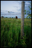 Fenced In by leavenotrase