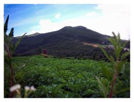 Dieng by latebraking