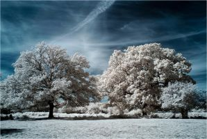 New Forest Infrared II by Dave-Ellis