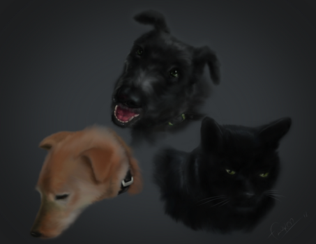 Cat and Dogs by fmarc