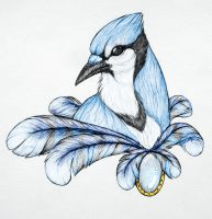 Blue Jay by NamaraDeMao