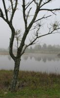 Tree and Fog 0356 Stock by Moon-WillowStock