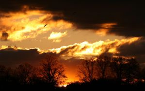 Fire In The Sky by Doumanis