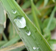 raindrops on blade of grass by andi40