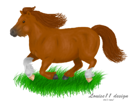 Shetland Pony by Carla-loves