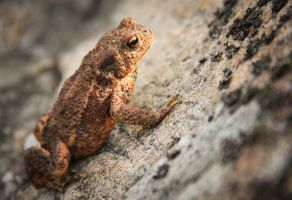 A frog by Hayine