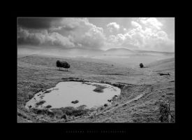 silence in the plain by Black-White-Club