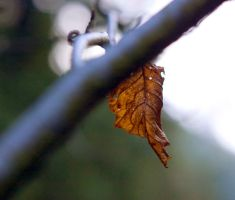 Leaf by ZamoraPhotography