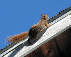 Baby Squirrel Out of his Nest by JocelyneR