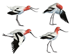 Wading Bird 02 PNG Stock by Jumpfer-Stock