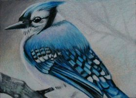 "ATC: ""Bluejay"" by catbones"