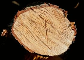 Wood End Texture - 9 by AGF81