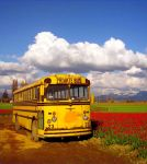 A Bus In The Tulip Field by Photos-By-Michelle