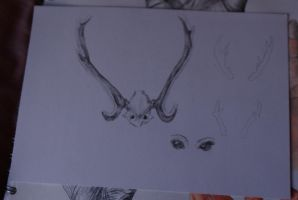 Antlers and eyes by Xanthiya