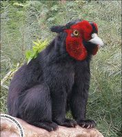 Red faced Bearird by HumanDescent